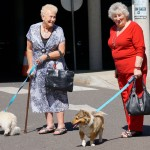 ladies-walking-dogs